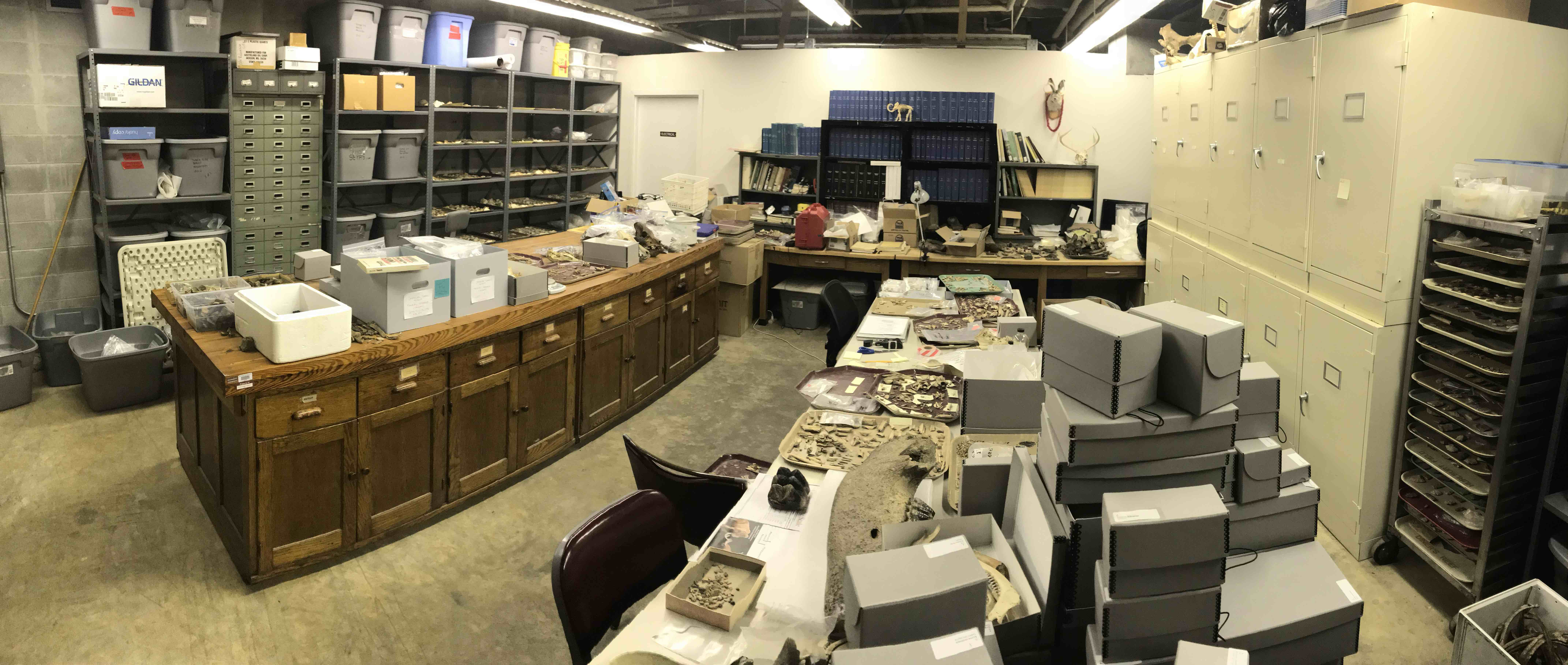 Zooarchaeology Lab 1